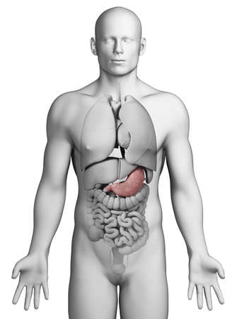 stomach pain: 3d rendered illustration - stomach