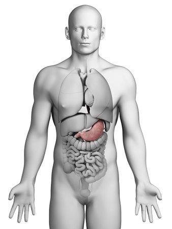 dolor de estomago: Ilustraci�n 3d rendered - est�mago Foto de archivo