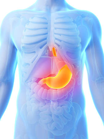 stomache: 3d rendered illustration - painful stomach Stock Photo