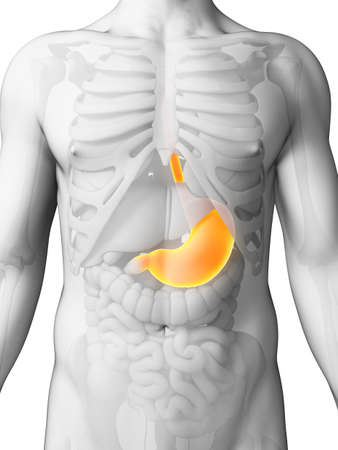 stomach illustration: 3d rendered illustration - painful stomach Stock Photo