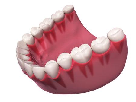 3d rendered illustration - lower teeth Stock Photo