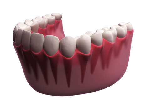lower teeth: 3d rendered illustration - lower teeth Stock Photo