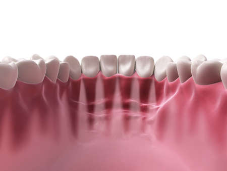chew: 3d rendered illustration - lower teeth Stock Photo