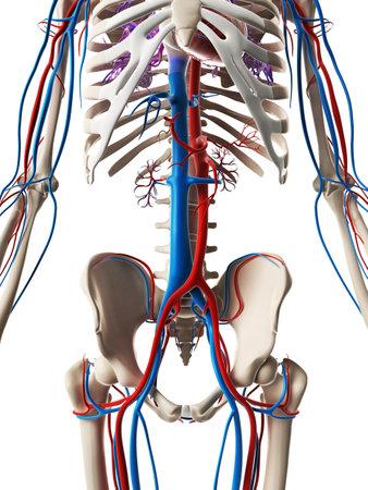 3d illustration de rendu - système vasculaire Banque d'images