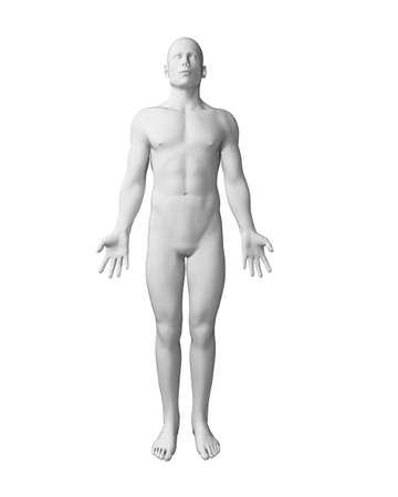 male body: 3d rendered illustration - white male body