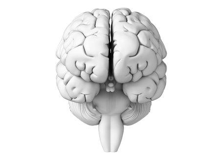morphology: 3d rendered illustration - white brian