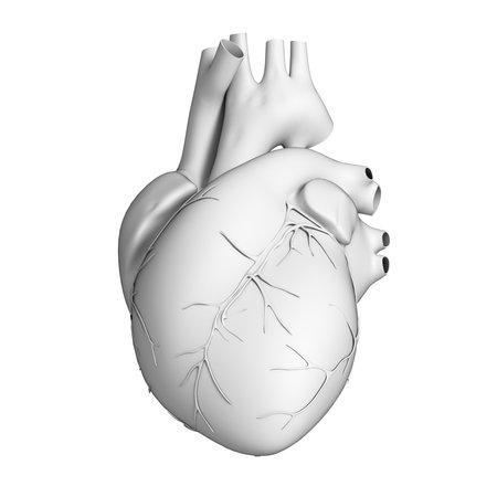 human vein  heartbeat: 3d rendered illustration - white heart Stock Photo