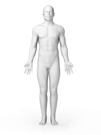 anatomy body: 3d rendered illustration - white male