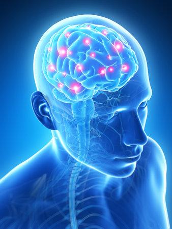 cerebro: Ilustración 3d rendered - cerebro activo