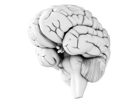 hypothalamus: 3d rendered illustration - white brian