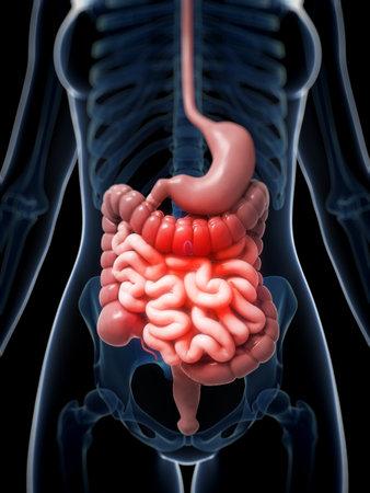 convulsion: 3d rindió la ilustración de un vientre doloroso