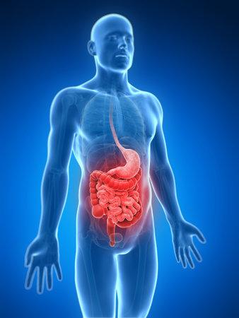 convulsion: 3d rindi� la ilustraci�n de un vientre doloroso
