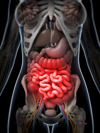 spasm: 3d rendered illustration of a painful belly