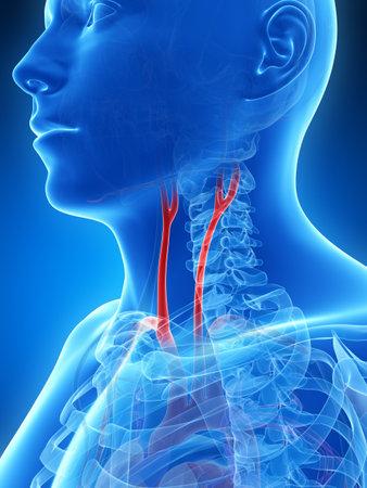 anatom�a: 3d rindi� la ilustraci�n de la arteria car�tida
