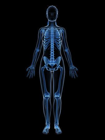 esqueleto humano: 3d rindió la ilustración del esqueleto femenino