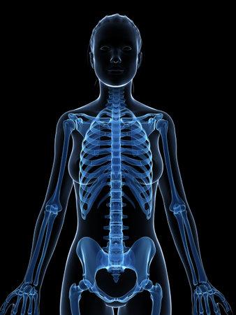 여성 뼈대의 3D 렌더링 된 그림 스톡 콘텐츠 - 18448727