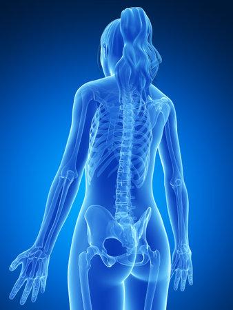 bone health: 3d rendered illustration of the female skeleton Stock Photo