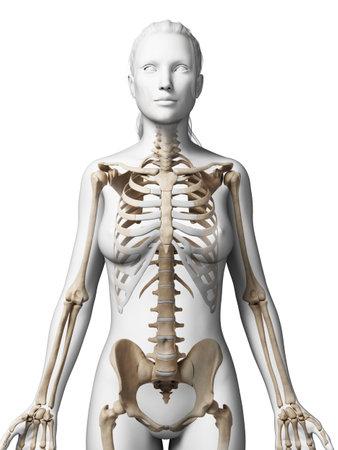 여성 뼈대의 3D 렌더링 된 그림 스톡 콘텐츠 - 18448706