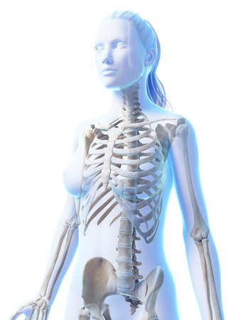 human bones: 3d rendered illustration of the female skeleton Stock Photo
