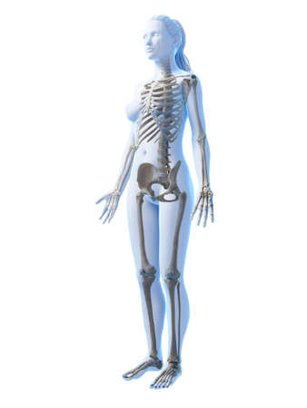 3d rendered illustration of the female skeleton Stock fotó