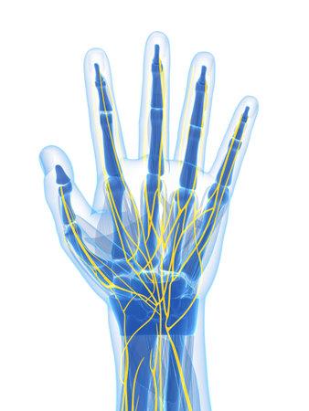 nervios: 3d rindi� la ilustraci�n de los nervios mano humana Foto de archivo