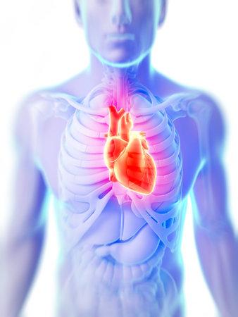 veine humaine: 3d illustration rendu du c?ur humain Banque d'images