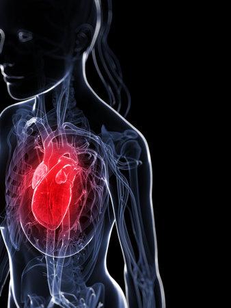 vasos sanguineos: 3d rindió la ilustración del corazón femenino