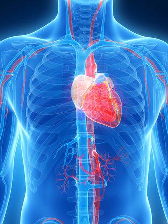 3d rindió la ilustración del corazón humano