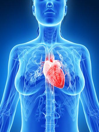 hartaanval: 3d teruggegeven illustratie van het vrouwelijk hart Stockfoto