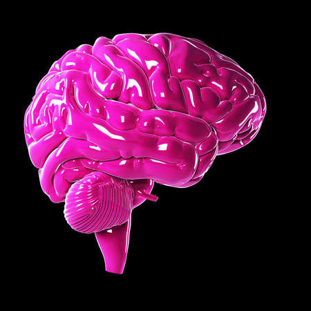 3d rendered illustration of a glossy pink brain illustration