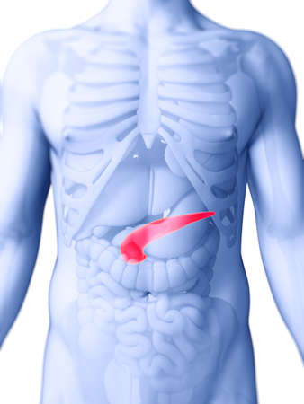 pancreatitis: 3d rendered illustration of the human pancreas Stock Photo