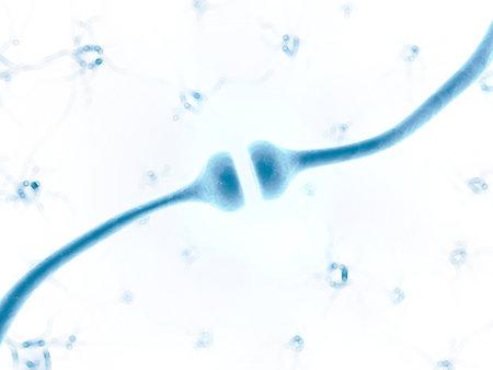 impulse: 3d gerenderten Darstellung eines menschlichen Rezeptors