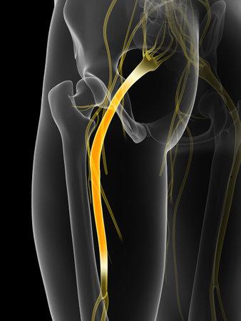 nervios: 3d rindi� la ilustraci�n del nervio ci�tico