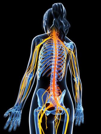mediaan: 3d teruggegeven illustratie van het vrouwelijk zenuwstelsel Stockfoto