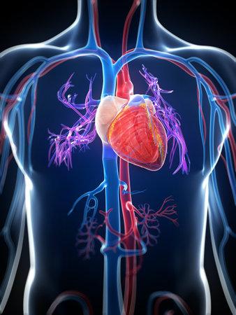 heart disease: 3d rindió la ilustración del corazón humano