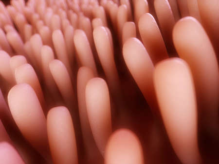 gut: 3d rendered illustration of colon villi Stock Photo