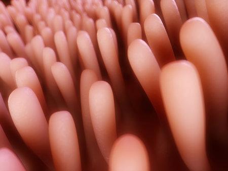 intestino grueso: 3d rindi� la ilustraci�n de las vellosidades del colon Foto de archivo