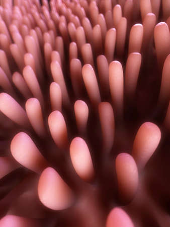 from small bowel: 3d rendered illustration of colon villi Stock Photo