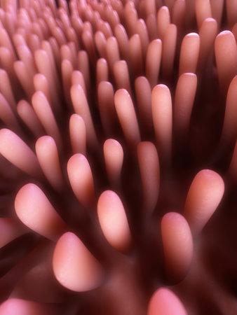 gastrointestinal: 3d rindi� la ilustraci�n de las vellosidades del colon Foto de archivo