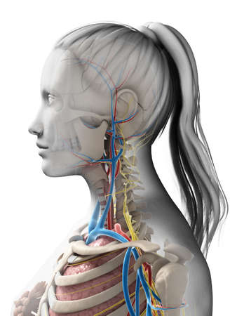 sigmoid: 3d rendered illustration of the female anatomy Stock Photo