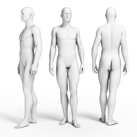 anatomie mens: 3d teruggegeven illustratie van een aantal gemiddelde jongens