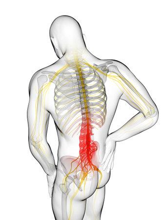 centres: 3d rendered illustration of a man having backache