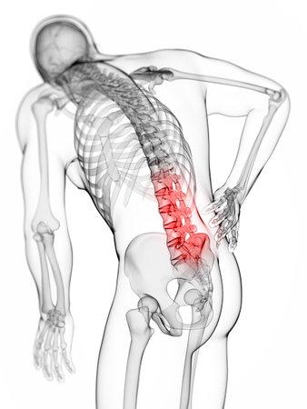 scheletro umano: Illustrazione di rendering 3D - mal di schiena maschile Archivio Fotografico