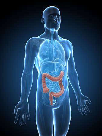 3d rendered illustration of a male´s colon illustration