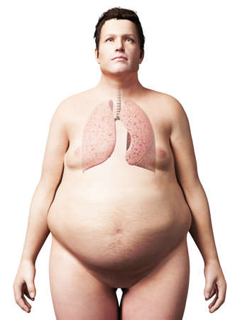 3d rendered illustration of an overweight man - lung illustration
