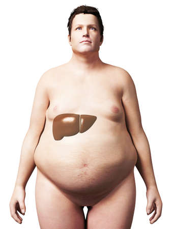 portly: 3d rendered illustration of an overweight man - liver Stock Photo