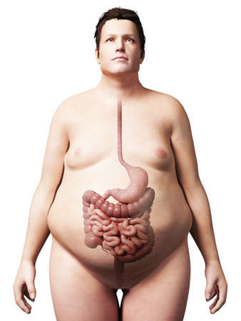 colon: 3d rendered illustration of an overweight man - digestive system