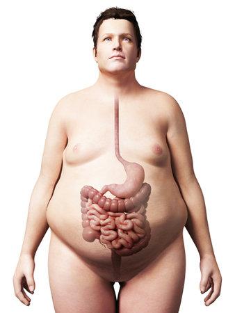 sistema digestivo: 3d rindió la ilustración de un hombre con sobrepeso - sistema digestivo