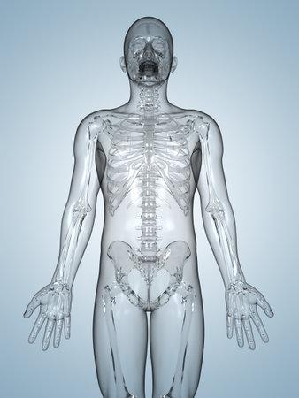 intervertebral: 3d rendered illustration of a glass skeleton