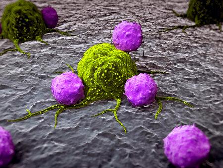 canc�rologie: Illustration de rendu 3D de leucocytes attaquant une cellule canc�reuse